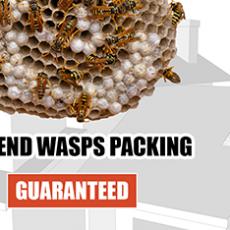 wasp-control-logo